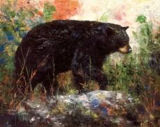 Bear Tracks - Product Image