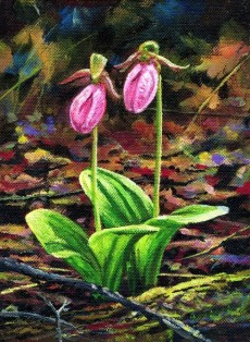 Lady Slippers - Product Image