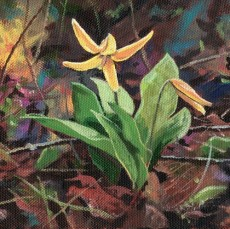 Trout Lilly - Product Image
